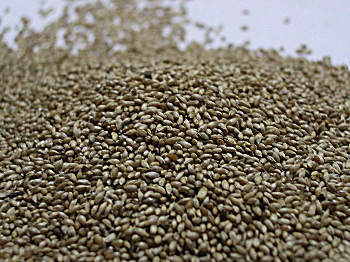 Семена тимофеевки
