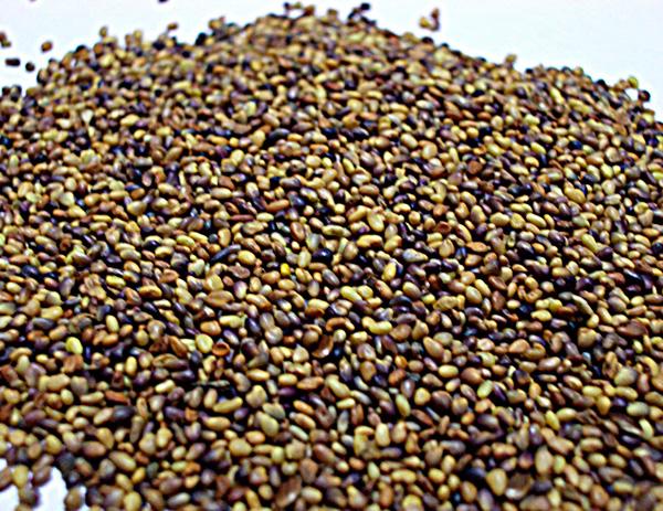 Семена красного клевера